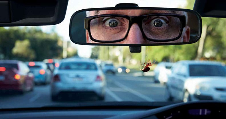 A man driving his car with a spider on his windscreen