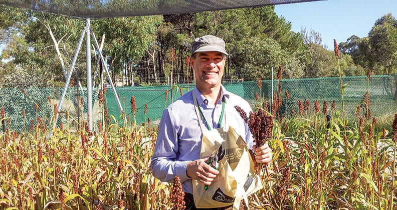 Stuart Johnson in a field of sorghum