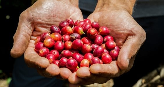 Reviving the coffee industry in Papua New Guinea